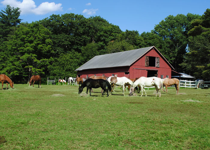Animal Barn & Stables